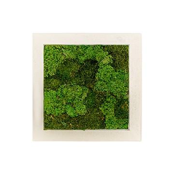 Zelené stěny - Mechový obraz natural 50x50cm 50%silver+50%flat mechu