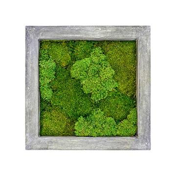 Zelené stěny - Mechový obraz šedý 70x70cm 30%silver+70%flat mechu