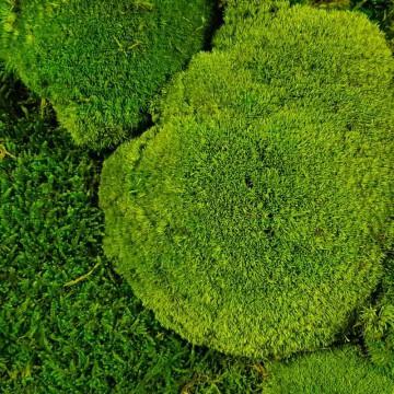 Zelené stěny - Stabilizovaný mech Ballmoss volně 1 m2