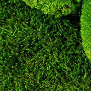 Zelené stěny - Stabilizovaný mech Flattmoss volně 20x20 cm