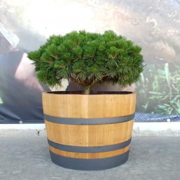 Sudové květináče - Barikovaný dubový květináč 110 litrů 70x48cm