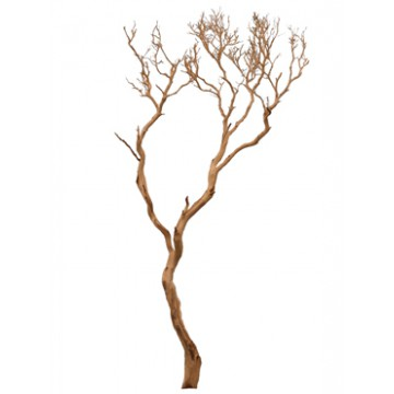 Dekorace - Manzanita natural 300cm