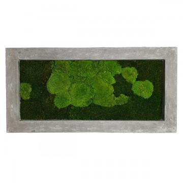 Zelené stěny - Mechový obraz šedý 100x50cm 50%ball+50%flat mechu