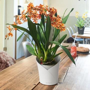 Lechuza květináče - Lechuza Orchidea White mat komplet
