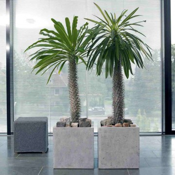 Venkovní květináče - Square Grey 50x50x50cm