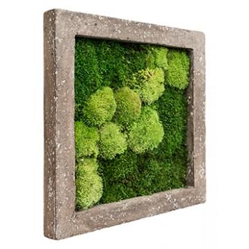 Zelené stěny - Mech a rám rock komplet 50x50 cm