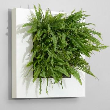 Zelené stěny - Živý obraz bílý 72x72cm