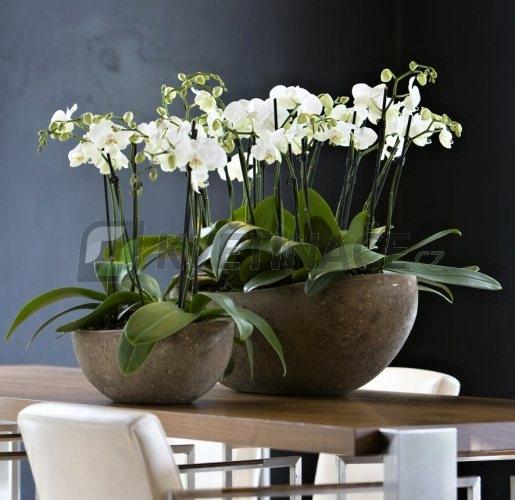Luxusní květináče - Polystone Rock Boat 46x20x13cm