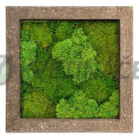 Zelené stěny - Mechový obraz rock 70x70cm 30%silver+70%flat mechu
