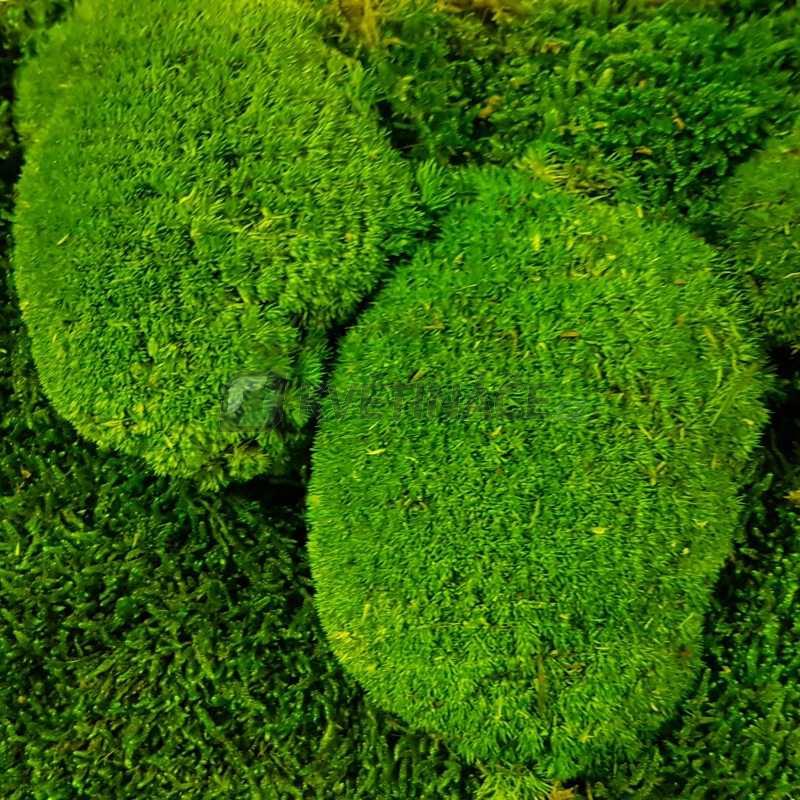 Zelené stěny - Stabilizovaný mech Ball moss volně 25x25 cm