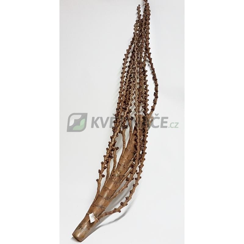 Dekorace - Dekorativní dřevěná větev Galho Buriti natural 150cm
