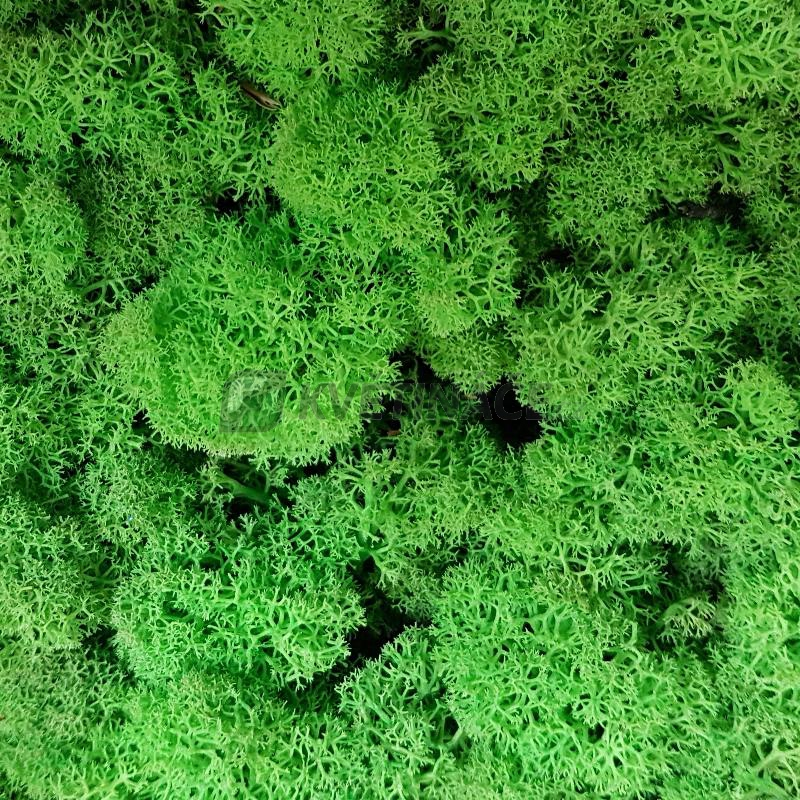 Zelené stěny - Stabilizovaný mech Island světle zelený 4kg-0,5m2