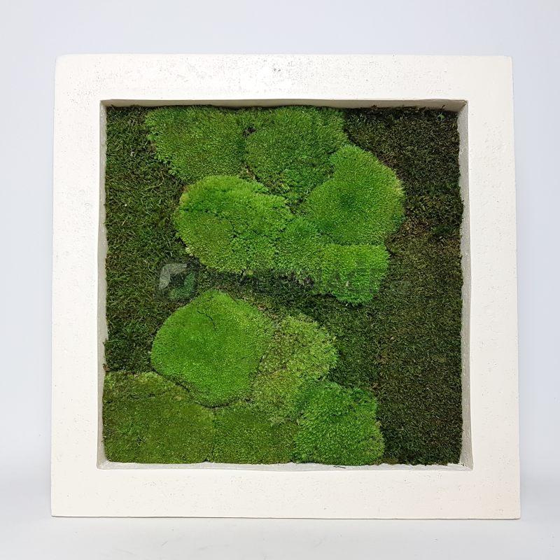 Zelené stěny - Mechový obraz natural 50x50cm 50%ball+50%flat mechu