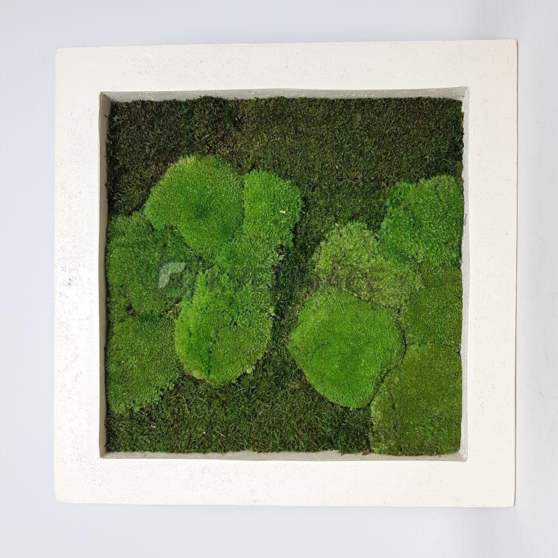Zelené stěny - Mechový obraz natural 70x70cm 50%ball+50%flat mechu