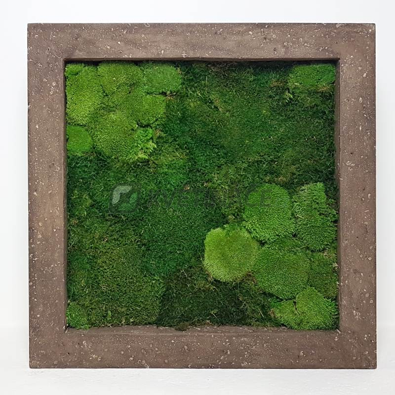 Zelené stěny - Mechový obraz rock 70x70cm 30%ball+70%flat mechu