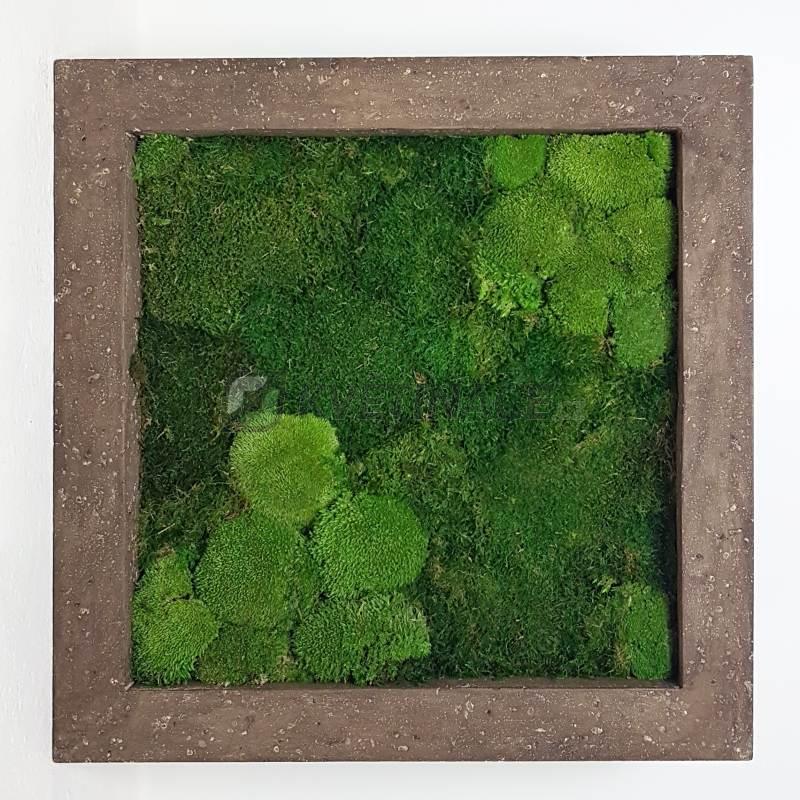 Zelené stěny - Mechový obraz rock 50x50cm 30%ball+70%flat mechu