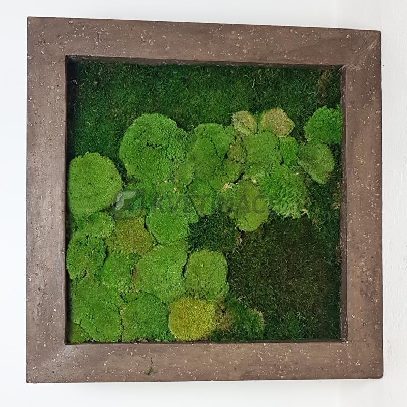 Zelené stěny - Mechový obraz rock 50x50cm 50%ball+50%flat mechu
