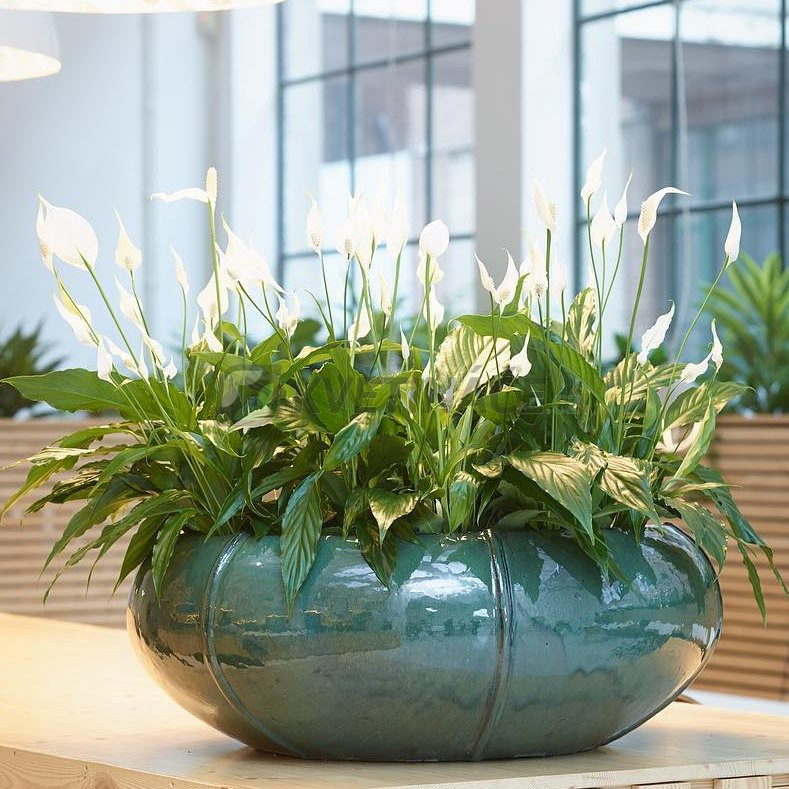 Keramické květináče - Moda Bowl Tahiti 55x22cm