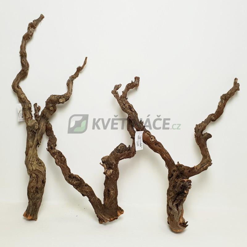 Dekorace - Dekorativní dřevěná větev Grapewood Natural 2 Heads