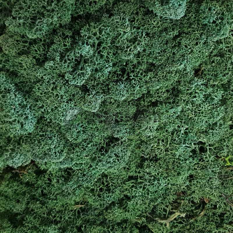 Zelené stěny - Stabilizovaný mech Island tmavě zelený 8kg-1m2