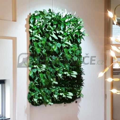 Zelené stěny - Živá zelená stěna horní základní set 100x75cm