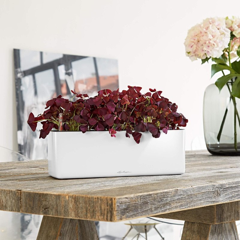 Lechuza květináče - Lechuza Cube Premium 14 truhlík White komplet