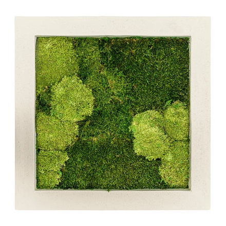 Zelené stěny - Mechový obraz natural 50x50cm 30%ball+70%flat mechu