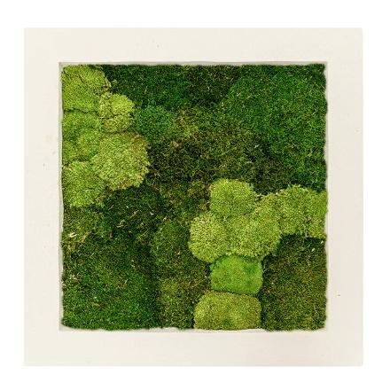 Zelené stěny - Mechový obraz natural 70x70cm 30%ball+70%flat mechu