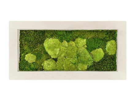 Zelené stěny - Mechový obraz natural 100x50cm 50%ball+50%flat mechu