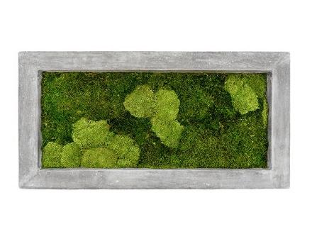 Zelené stěny - Mechový obraz šedý 100x50cm 30%ball+70%flat mechu