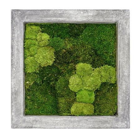 Zelené stěny - Mechový obraz šedý 70x70cm 30%ball+70%flat mechu
