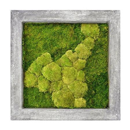 Zelené stěny - Mechový obraz šedý 70x70cm 50%ball+50%flat mechu