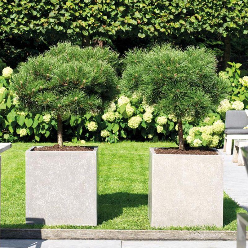 Venkovní květináče - Division Plus Square natural 50x50x54cm