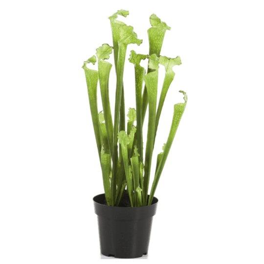 Umělé květiny - Umělá Sarracenia Green 65cm