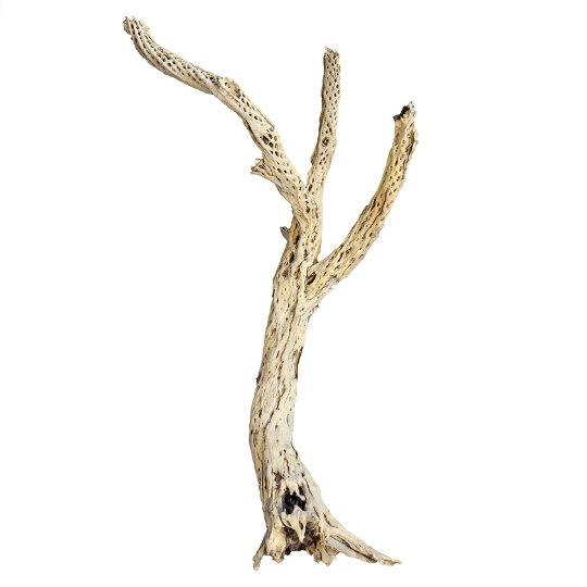 Dekorace - Dekorativní dřevěná větev Cholla 60cm
