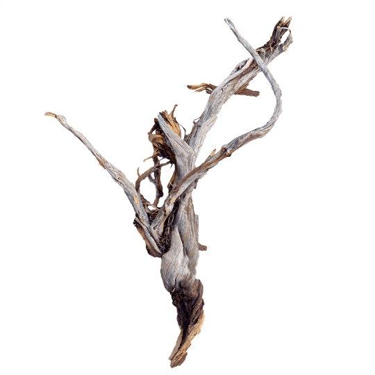 Dekorace - Dekorativní dřevěná větev Raw 75cm