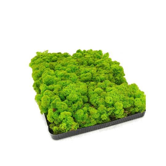 Zelené stěny - Stabilizovaný mech Island světle zelený 2kg-0,25m2