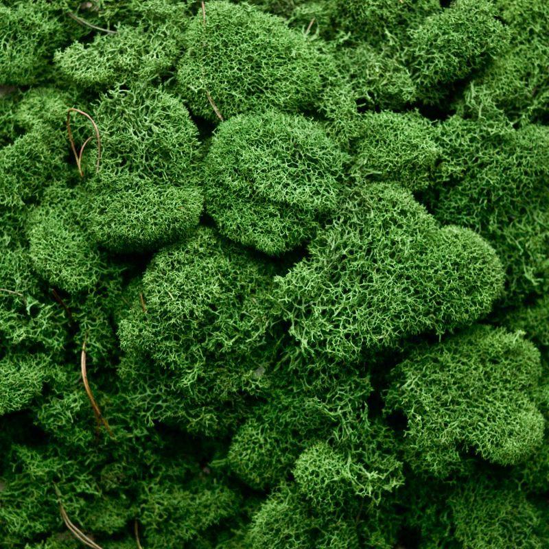 Zelené stěny - Stabilizovaný mech Island přirozeně zelený 4kg-0,5m2