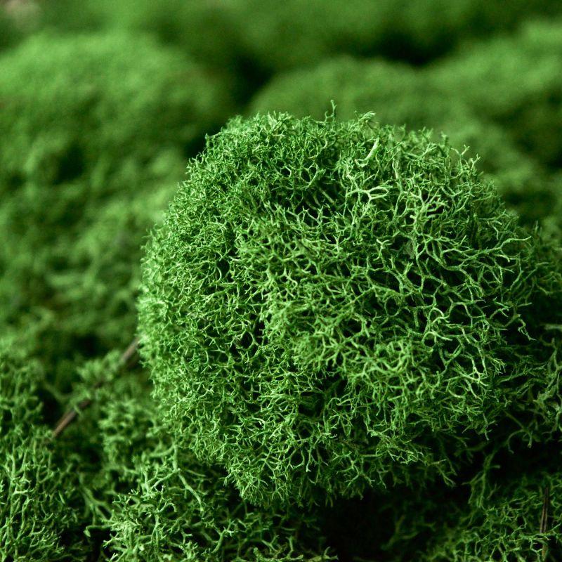 Zelené stěny - Stabilizovaný mech Island přirozeně zelený 2kg-0,25m2