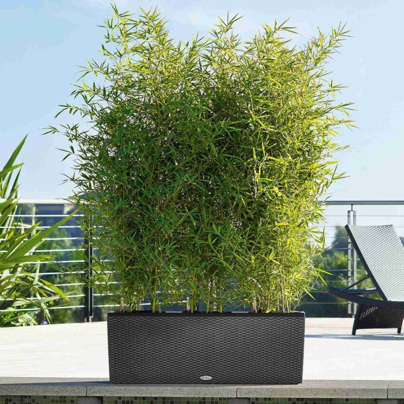 Lechuza květináče - Lechuza Trio Cottage 40 Granit komplet