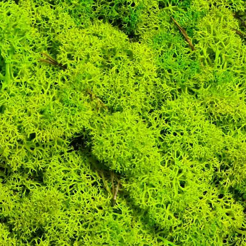 Zelené stěny - Stabilizovaný mech Norský Spring Green 0,5 m2