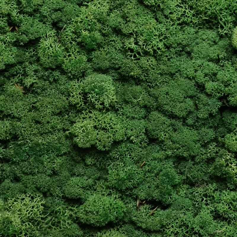 Zelené stěny - Stabilizovaný mech Norský Green 0,5 m2