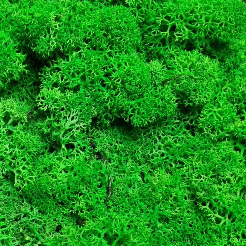 Zelené stěny - Stabilizovaný mech Norský Light Green 0,5 m2