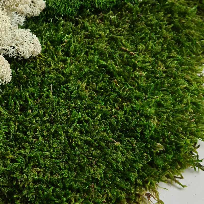 Zelené stěny - Stabilizovaný mech Flat moss volně 20x20 cm