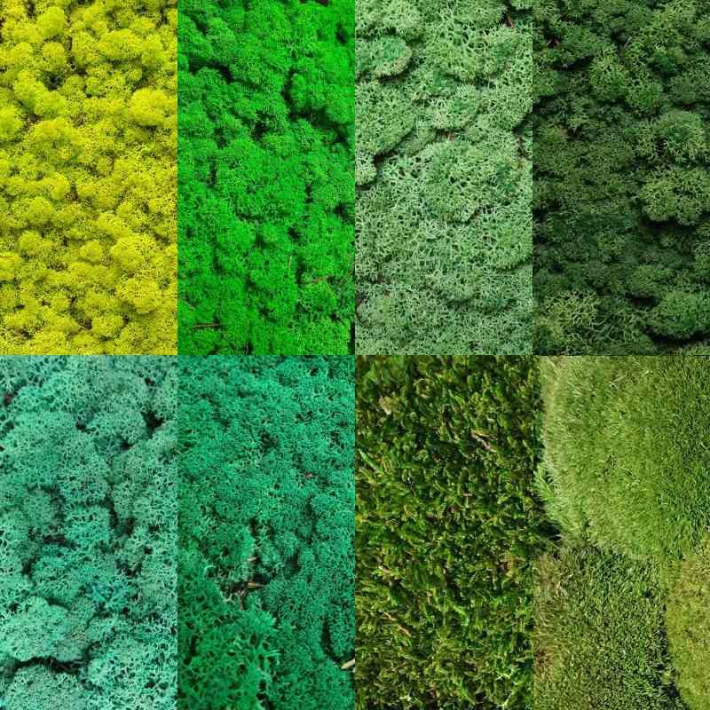 Zelené stěny - Vzorník zelených stabilizovaných mechů