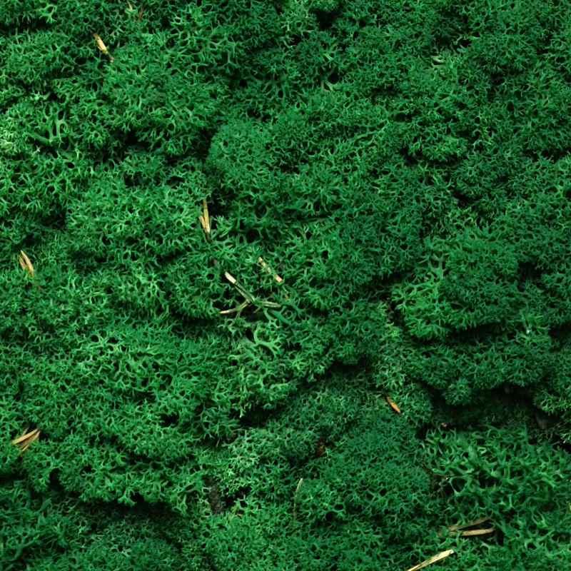 Zelené stěny - Stabilizovaný Norský mech Grass Green 500g