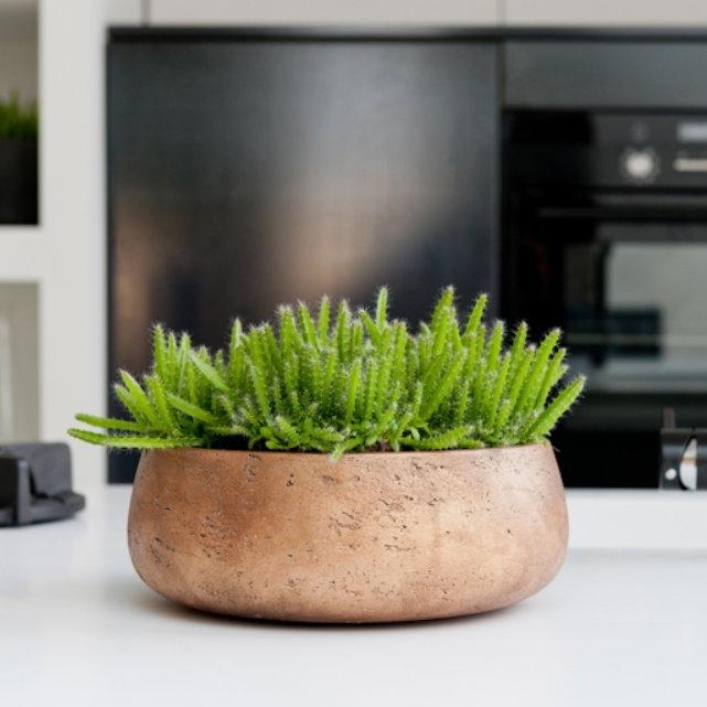 Venkovní květináče - Eco-line Bonsai mísa Copper 35x13cm