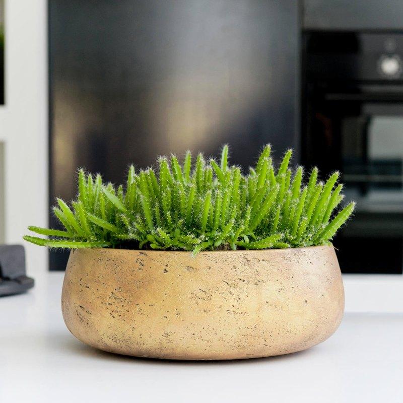 Venkovní květináče - Eco-line Bonsai mísa Gold 24x9cm