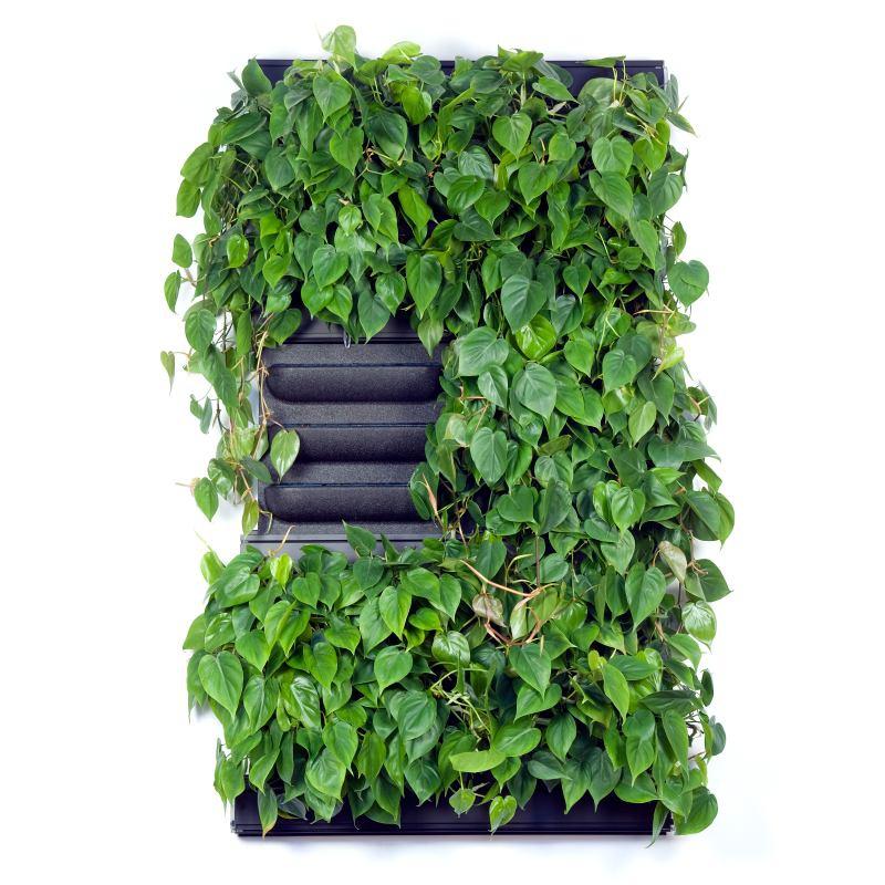 Zelené stěny - Zelená stěna LivePanel Pack 2x3 - 87x157cm