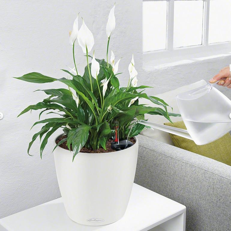 Lechuza květináče - Lechuza Classico Trend 21 White komplet